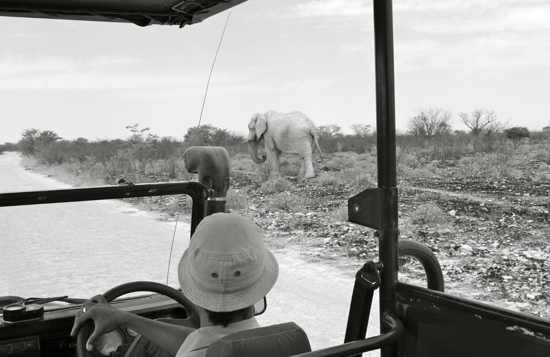 Photo Safari Mentions legales