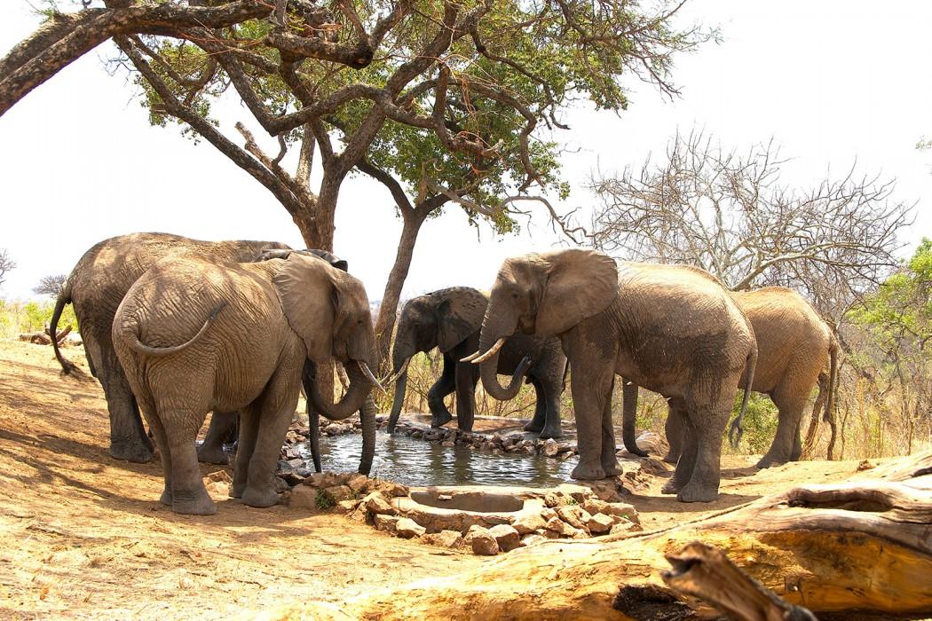 Elewana---Tarangire-elephants