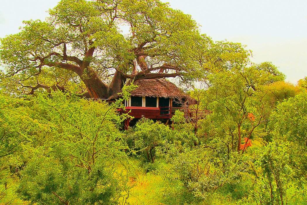 Elewana---Tarangire-treetops