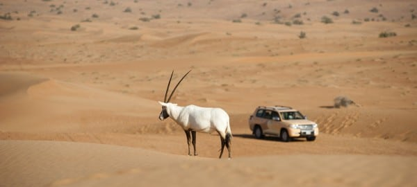Al Maha Desert Dubaï-Activities - wild life drive-1
