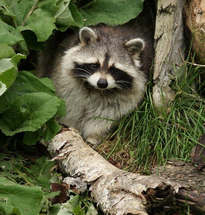 Canada Zoo de saint felicien 4