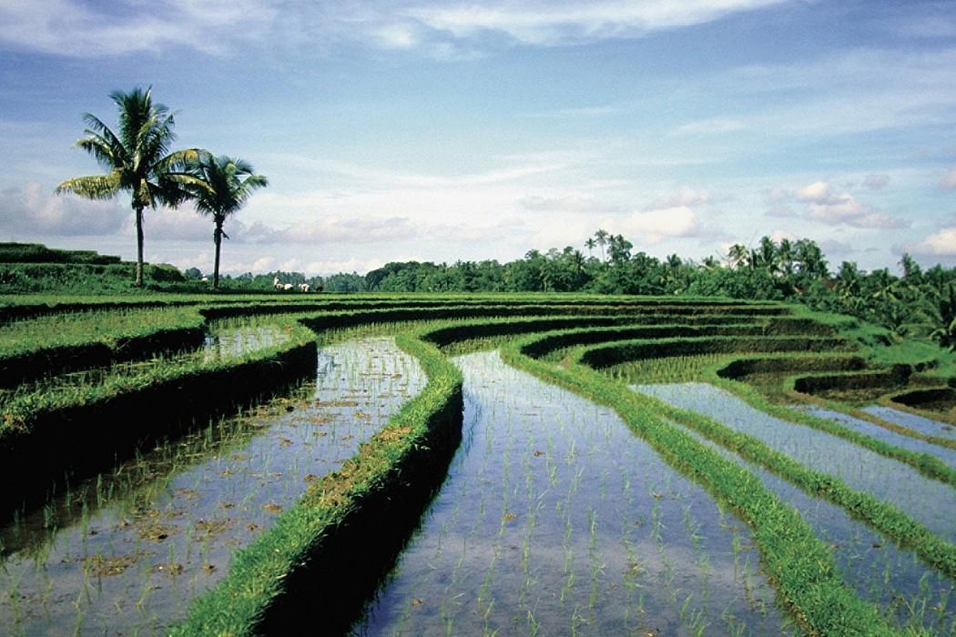 Mon Plus Beau Voyage_Bali_Ubud_FS_405