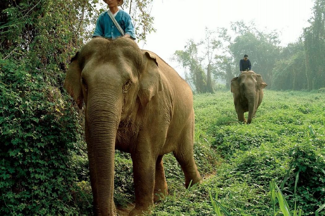 Mon Plus Beau Voyage_Chiang Rai_FS_014