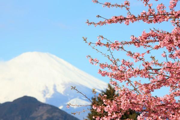 Mon Plus Beau Voyage au Japon - Sakura et Mt 2