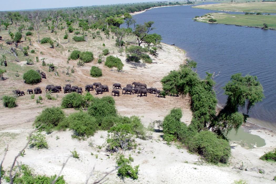 Zimbabwe - AE Chobe Elephants - Mon Plus Beau Voyage