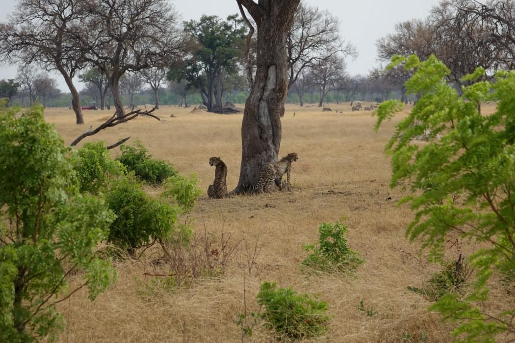 Zimbabwe Hangwe Little Makalolo 11