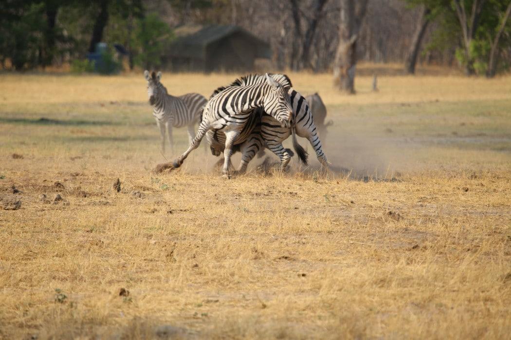 Zimbabwe Hangwe Little Makalolo 14