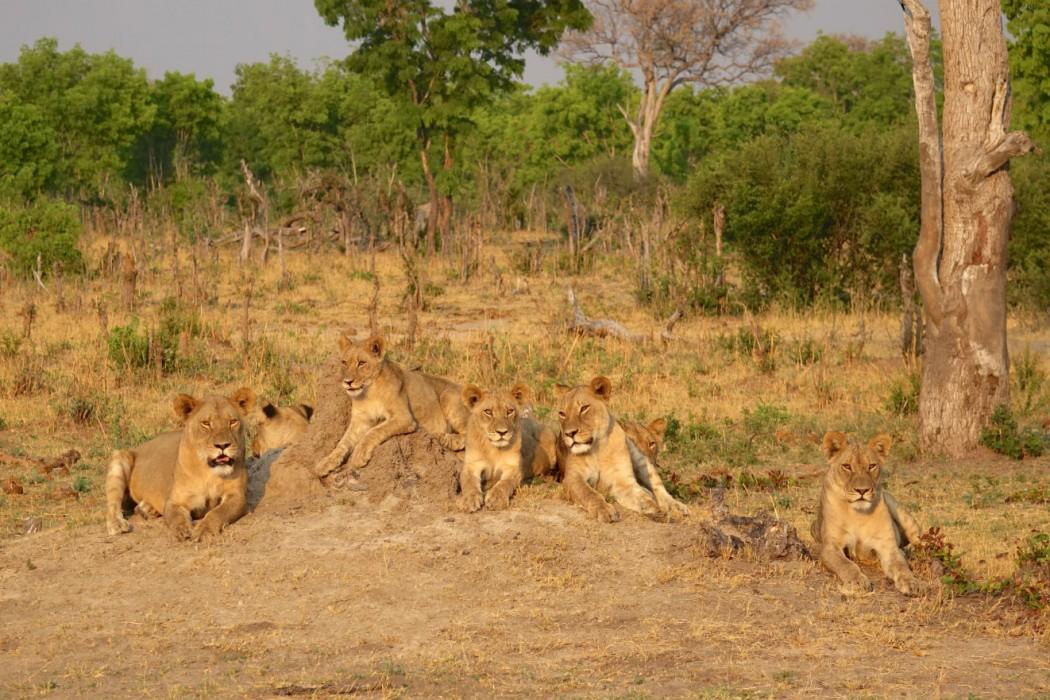 Zimbabwe Hangwe Little Makalolo 3