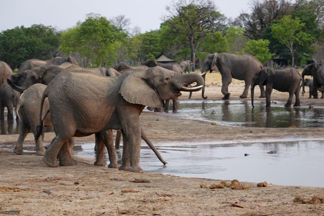 Zimbabwe Hangwe Little Makalolo 4