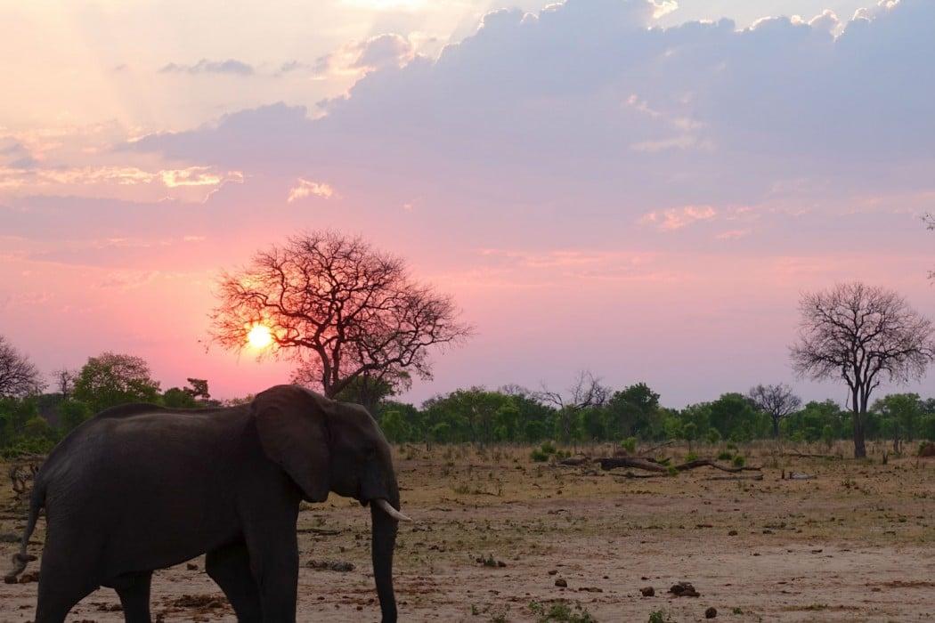 Zimbabwe Hangwe Little Makalolo 5
