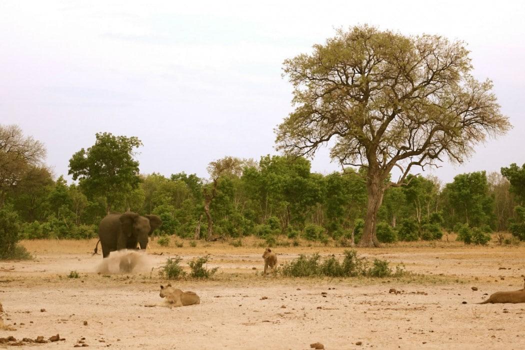 Zimbabwe Hangwe Little Makalolo 6