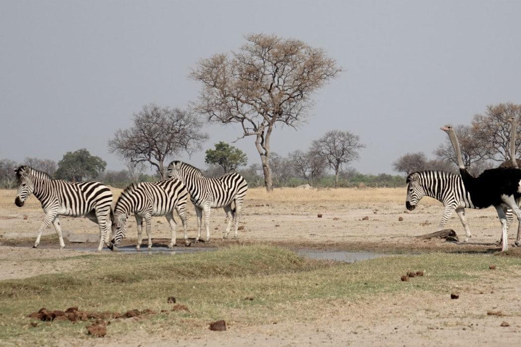 Zimbabwe Hangwe Little Makalolo 8