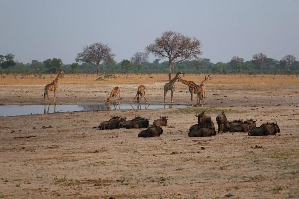 Zimbabwe Hangwe Little Makalolo 9