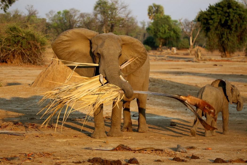 Zimbabwe Mana Pools Ruckomechi - Mon Plus Beau Voyage 10
