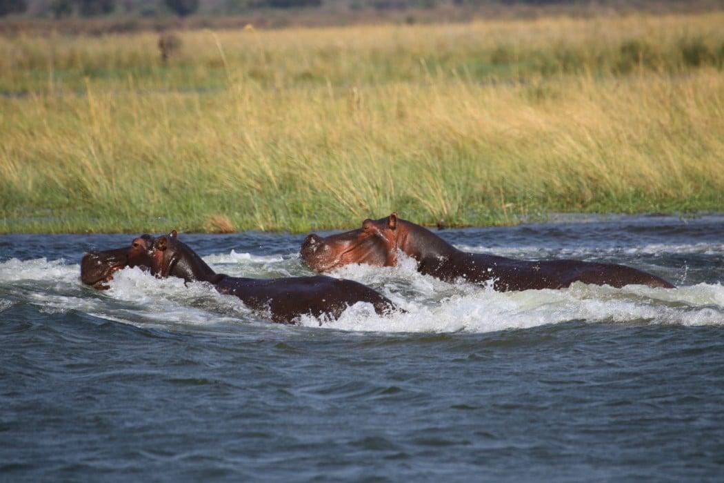 Zimbabwe Mana Pools Ruckomechi - Mon Plus Beau Voyage 11