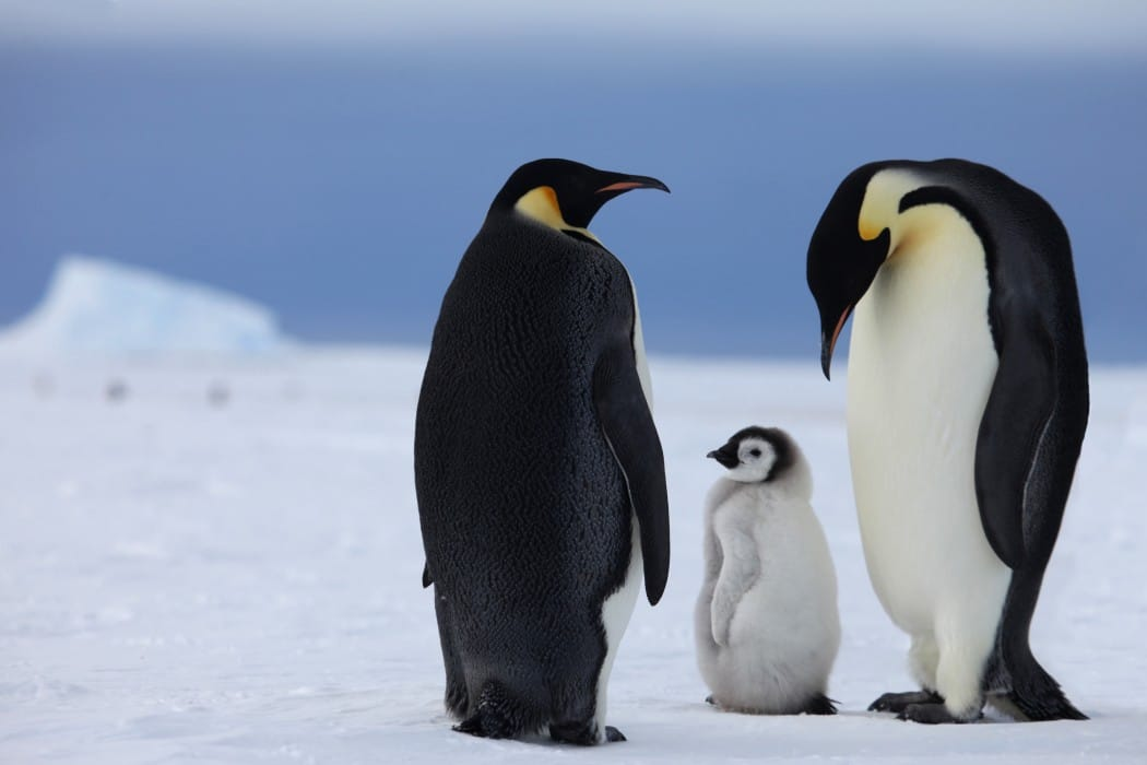 Mon Plus Beau Voyage - White Desert - pingouins