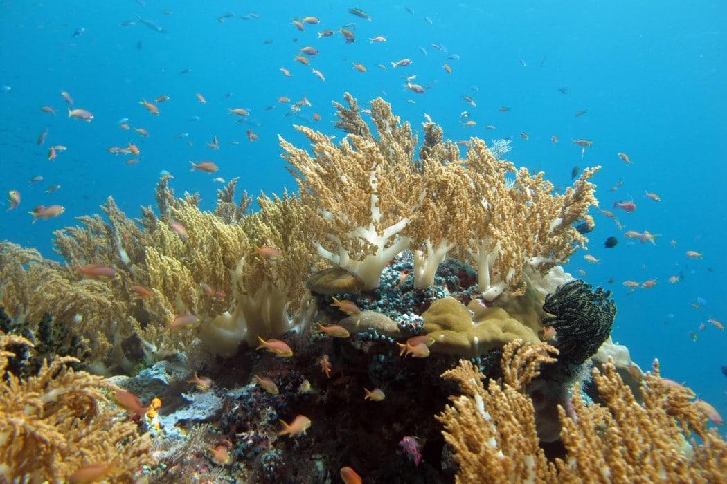 Mon Plus Beau Voyage a Raja Ampat_Le Ponant_ snorkeling 2
