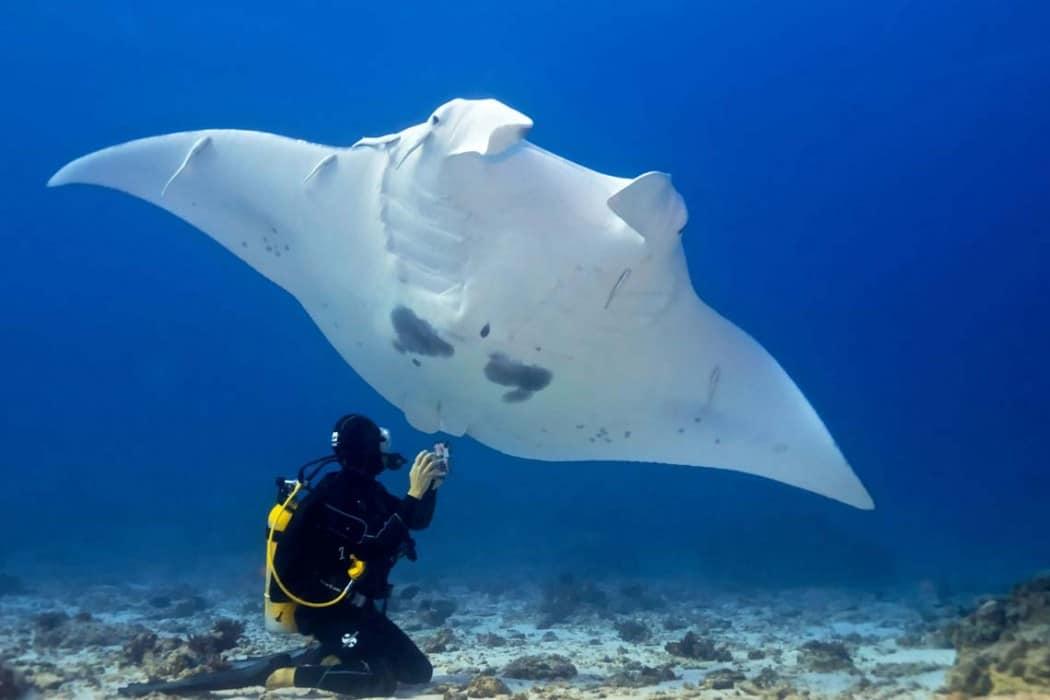 Mon Plus Beau Voyage en Australie_ nager avec les raies Manta_Bundaberg