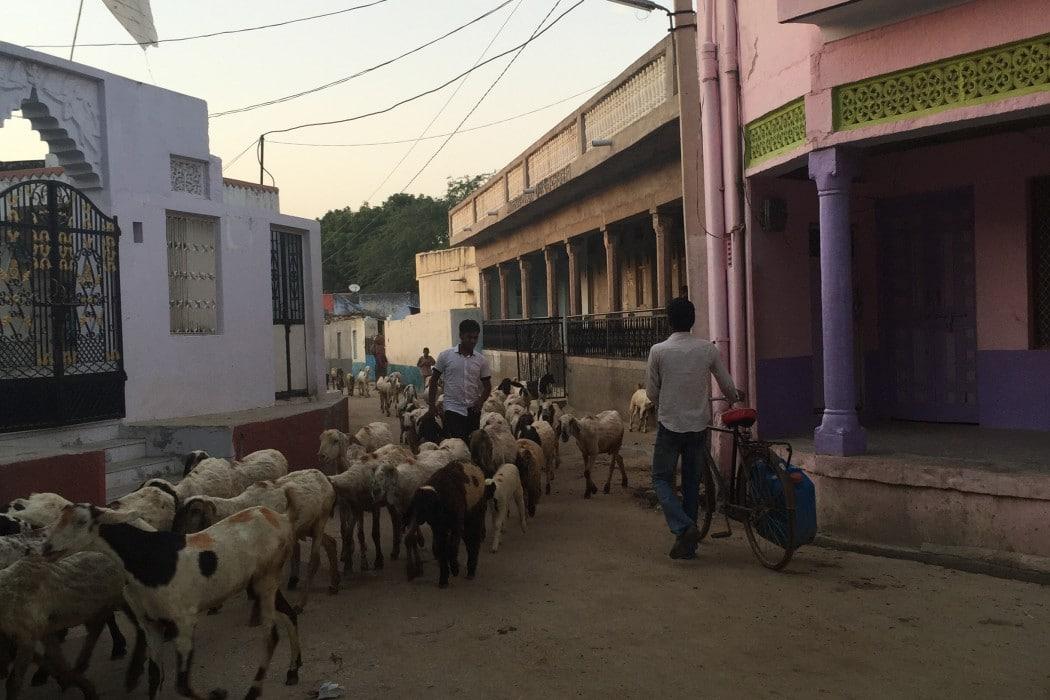 mon-plus-beau-voyage-en-inde-au-rajasthan-95