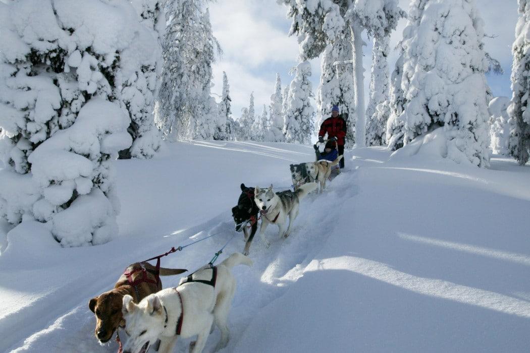glamping-laponie-finlande-napapiiri-camp-dogsled1