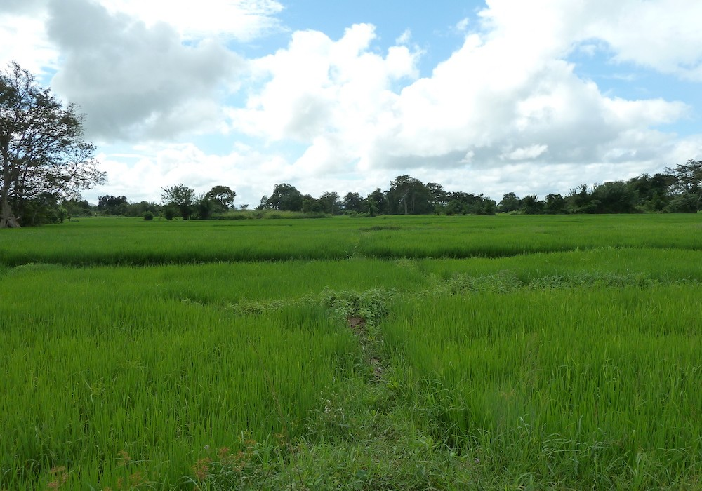 Mon Plus Beau Voyage au Sri Lanka eva-montis-sri-lanka-paddy-fields-in-habarana