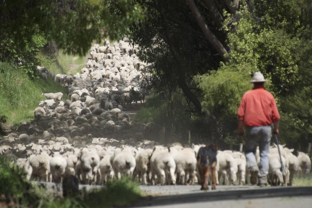 Mon Plus Beau Voyage en Nouvelle Zelande_HR Annandale Activities_Farm Tours