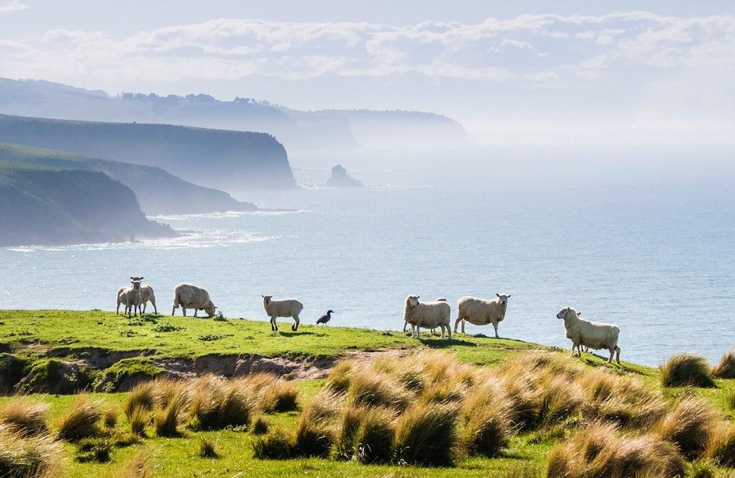 Mon Plus Beau Voyage en Nouvelle Zelande_HR Annandale farm cropped