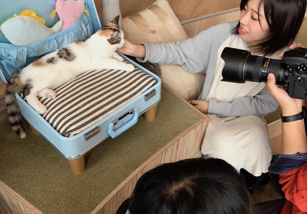 Circuit luxe sur mesure - Mon Plus Beau Voyage au Japon bar a chat