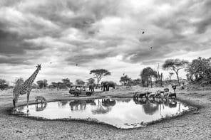 Le meilleur de la Tanzanie