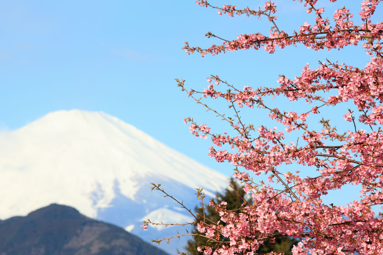 Notre agence vous prépare un voyage sur mesure au Japon !