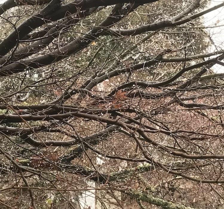 Neige à Kyoto.