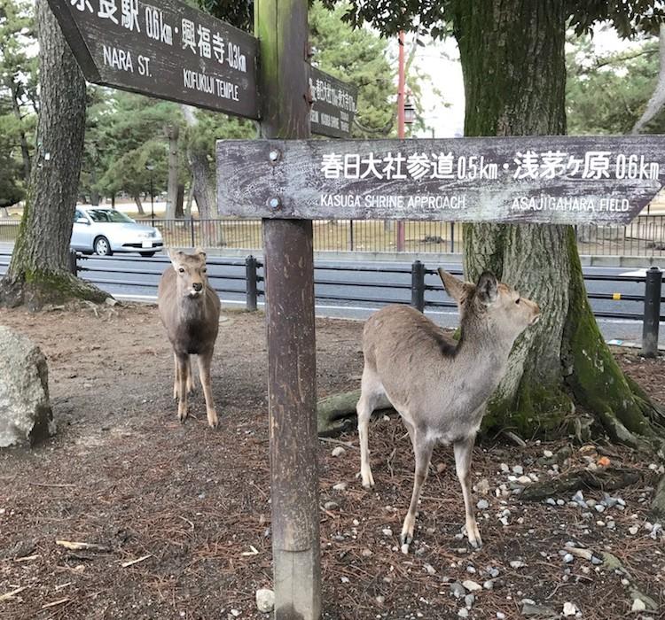 Visite de Nara