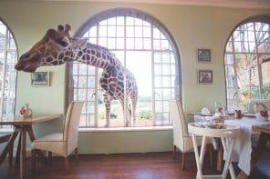 Safari aérien en Afrique avec &Beyond