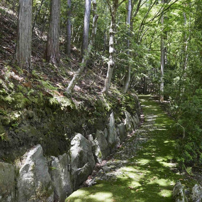 Forêt proche de l'Aman Kyoto au Japon.